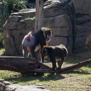 Plan a trip to the Dallas Zoo! | Teaspoon of Nose