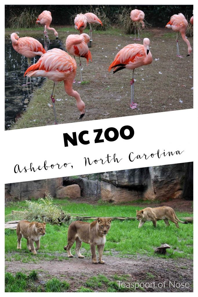 Having a great family day at the NC Zoo! | Teaspoon of Nose