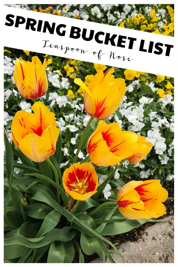 Spring Bucket List - moving, cleaning and life! | Teaspoon of Nose