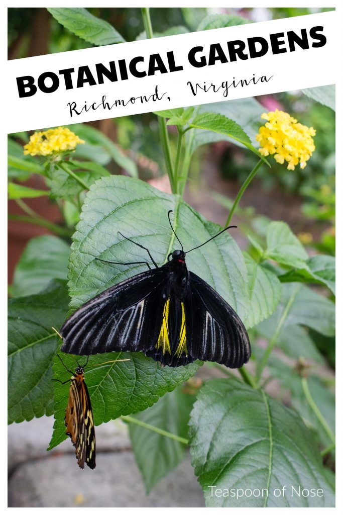 The Richmond Botanical Gardens makes the perfect kid-friendly summer day that's fun for the grown ups too!