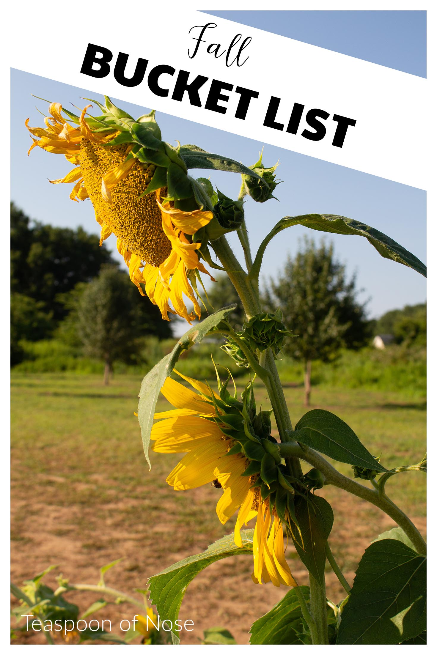 Fall bucket list for ALL the autumn fun! | Teaspoon of Nose