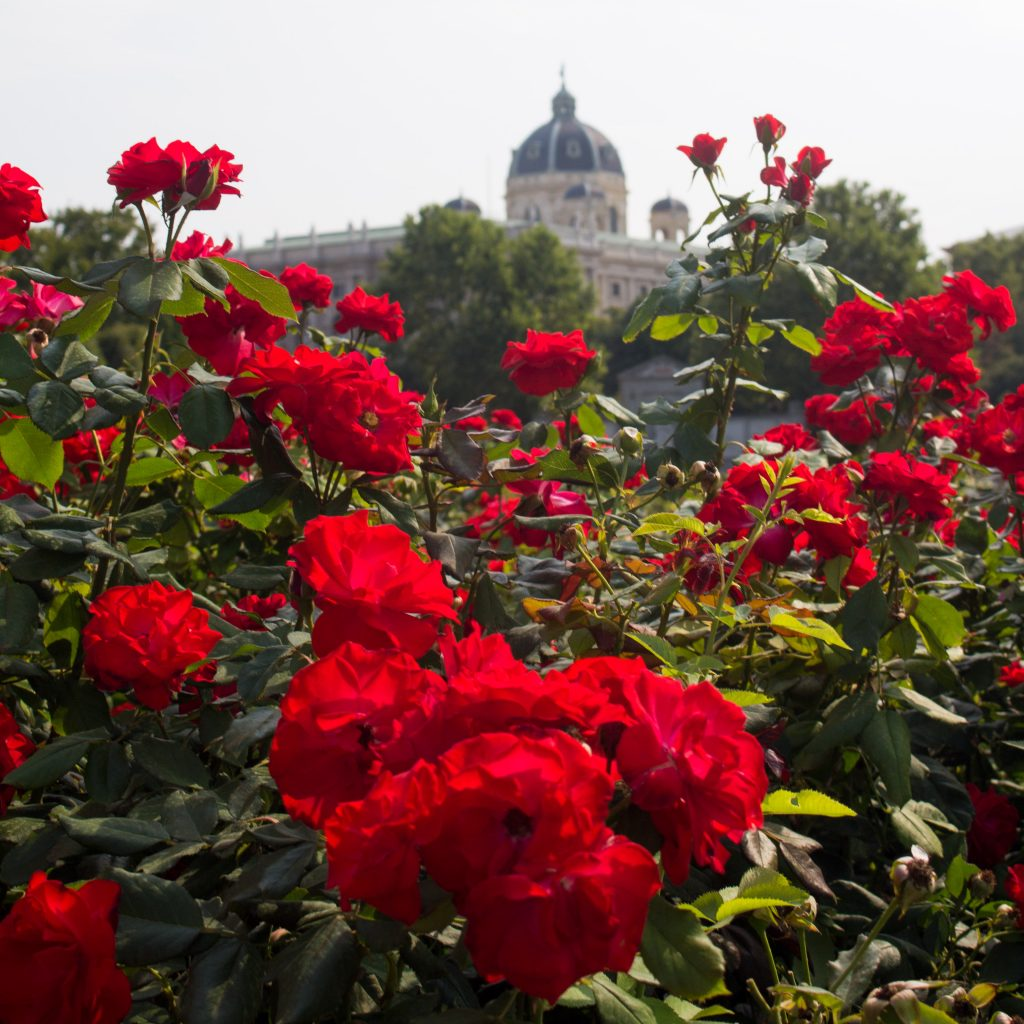 There's so much to see in Vienna that you need a plan. Here are my tips for spending one day in Vienna!