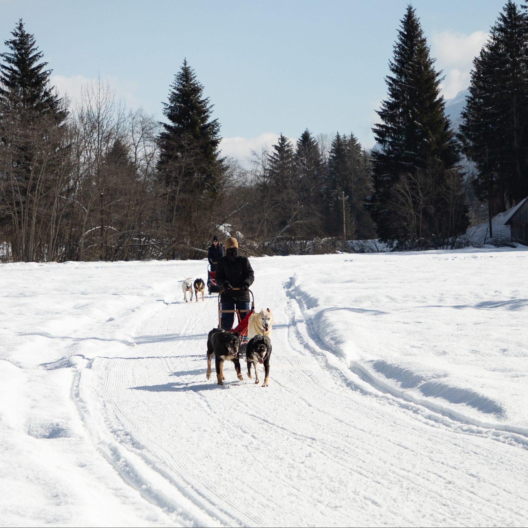 Tarvisio: beauty, snow, and dog sledding!