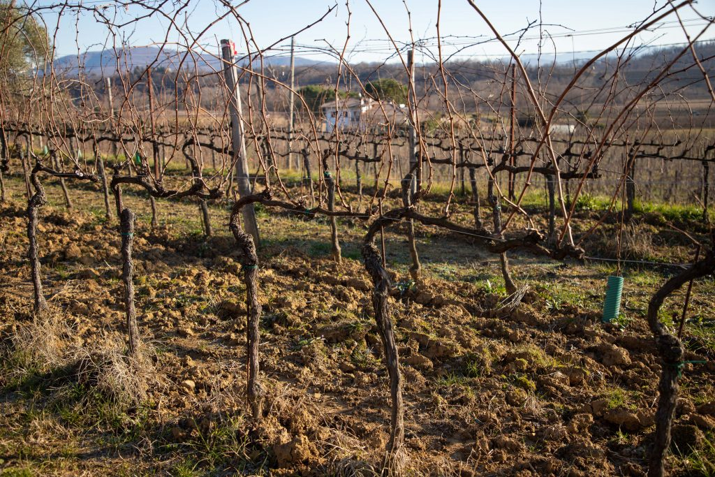 Friuli Venezia Giulia has a fantastic wine region that's easy to get to as a day trip from Venice, Aviano AB, or Trieste!