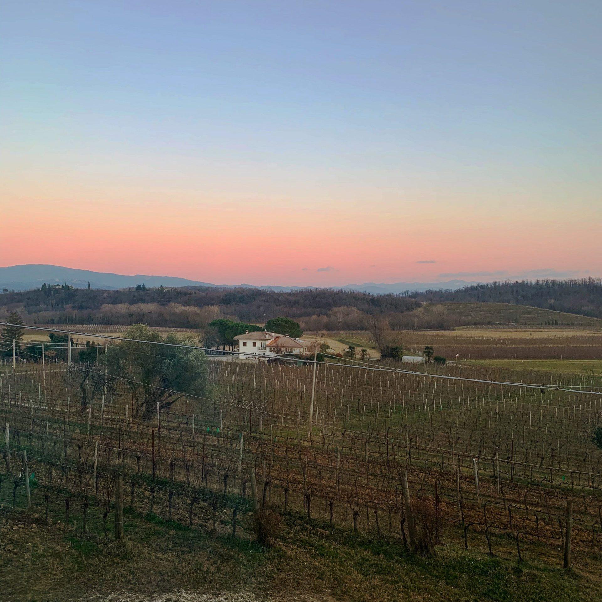 Exploring Friui Venezia Giulia's wine regions!